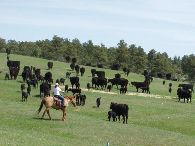 Ponderosa Ranch