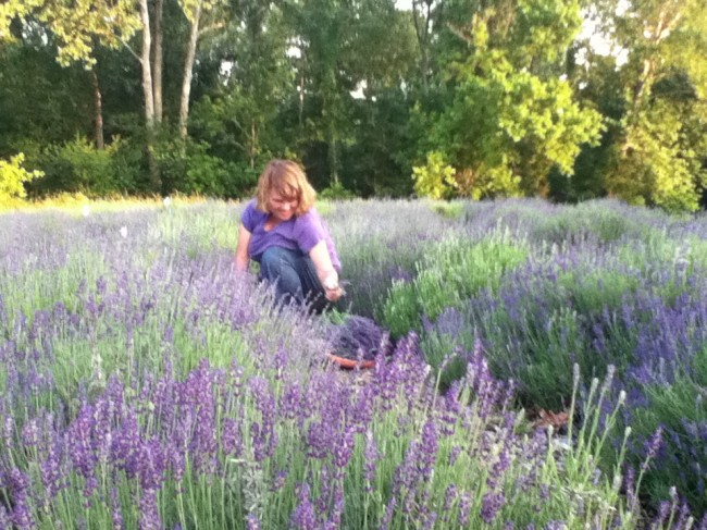 One-derings Lavender & Herb Farm