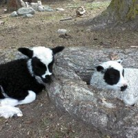 Shepherds Harvest Family Farm