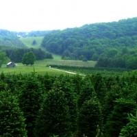 A Greene Tree Farm