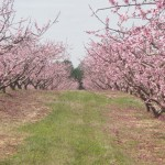 Mountain View Orchards