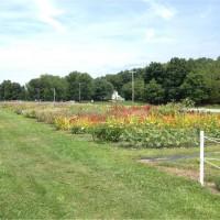 Raspberry Knoll Farm LLC